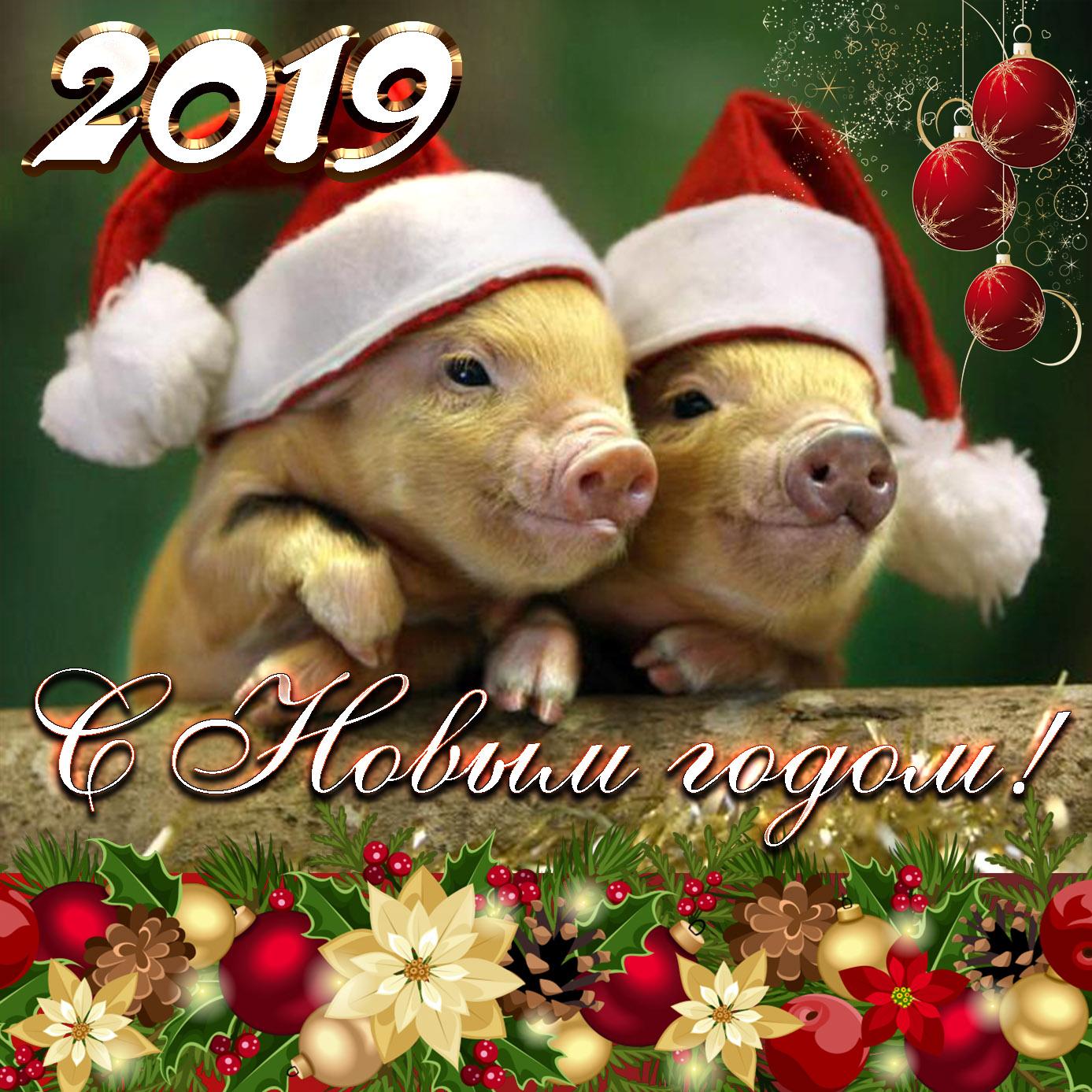 Открытка с милыми свинками на Новый 2019 год