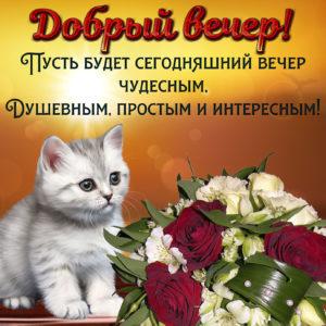 Котёнок желает доброго вечера на милой открытке