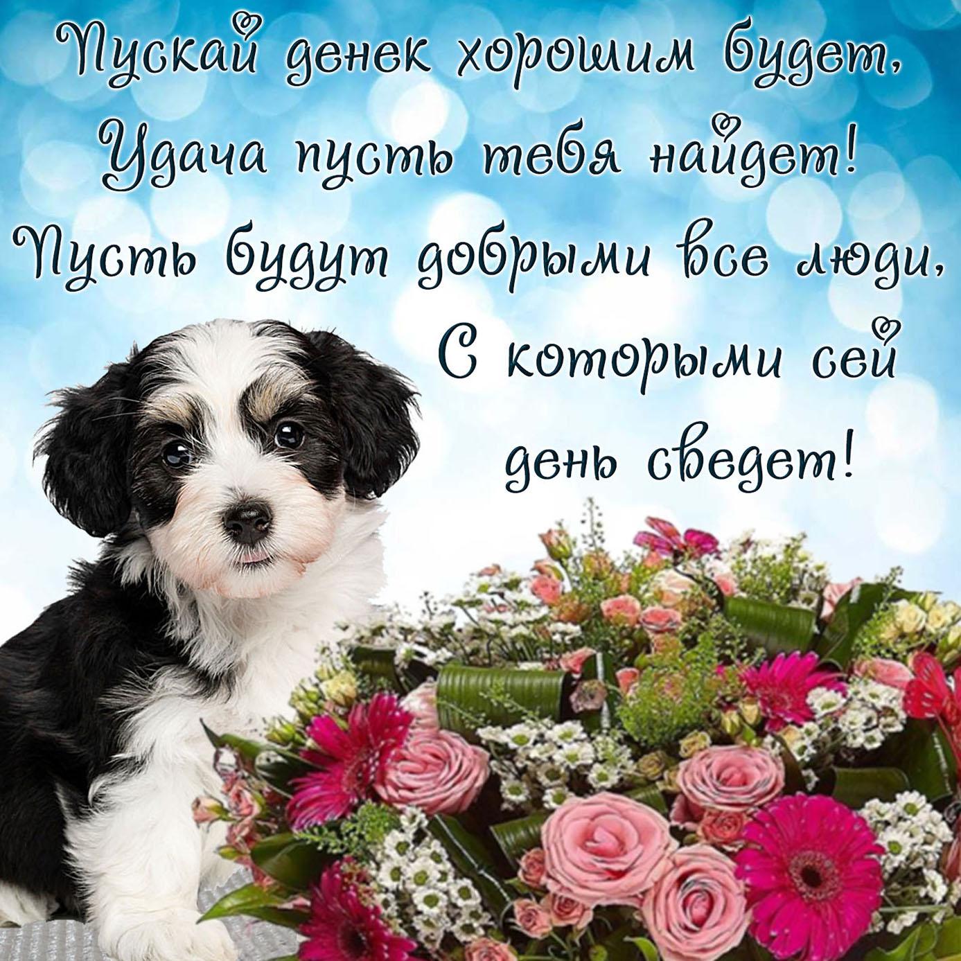 Картинка с собачкой и пожеланием на день