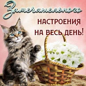 Котик желает замечательного настроения
