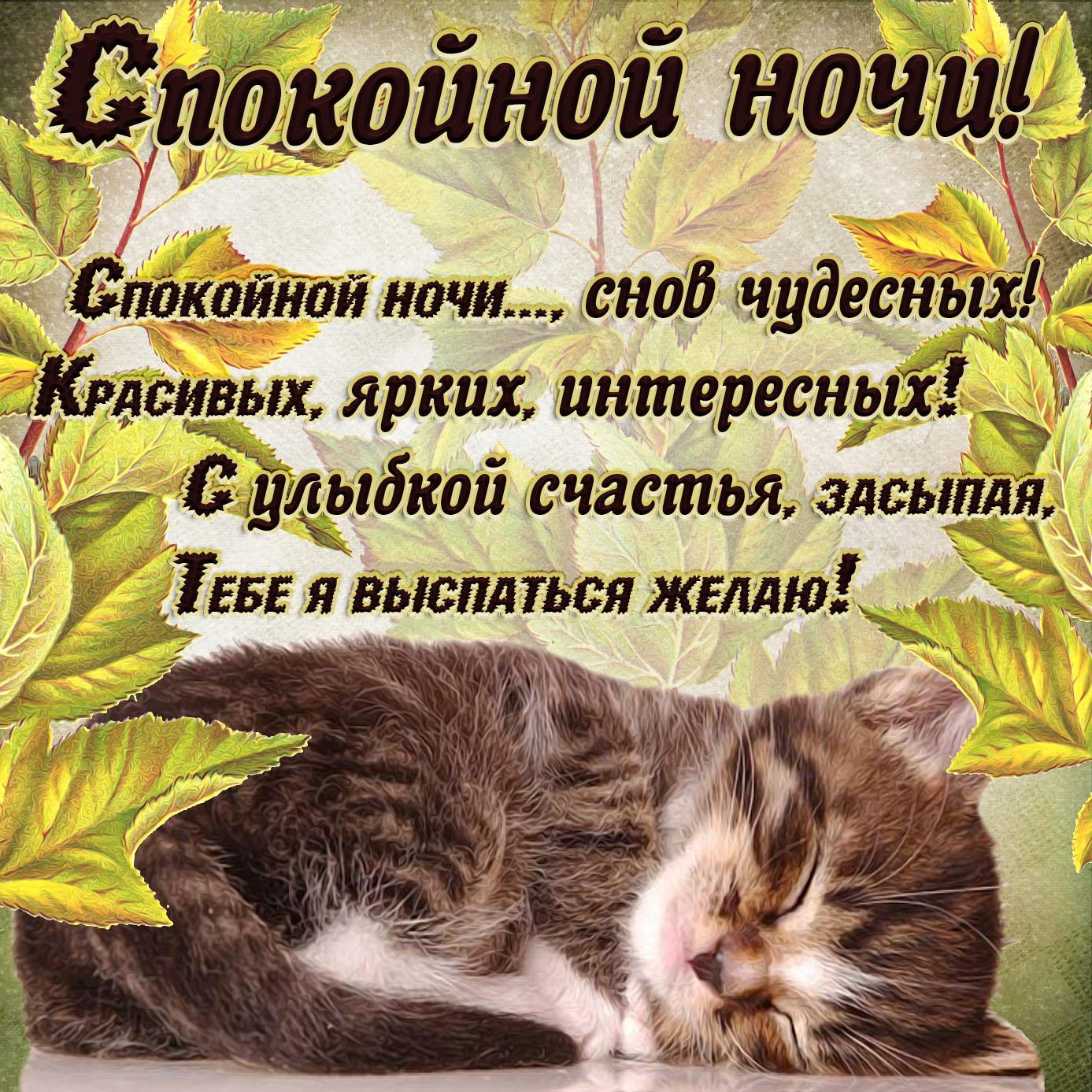 Картинка спокойной ночи со спящим котиком