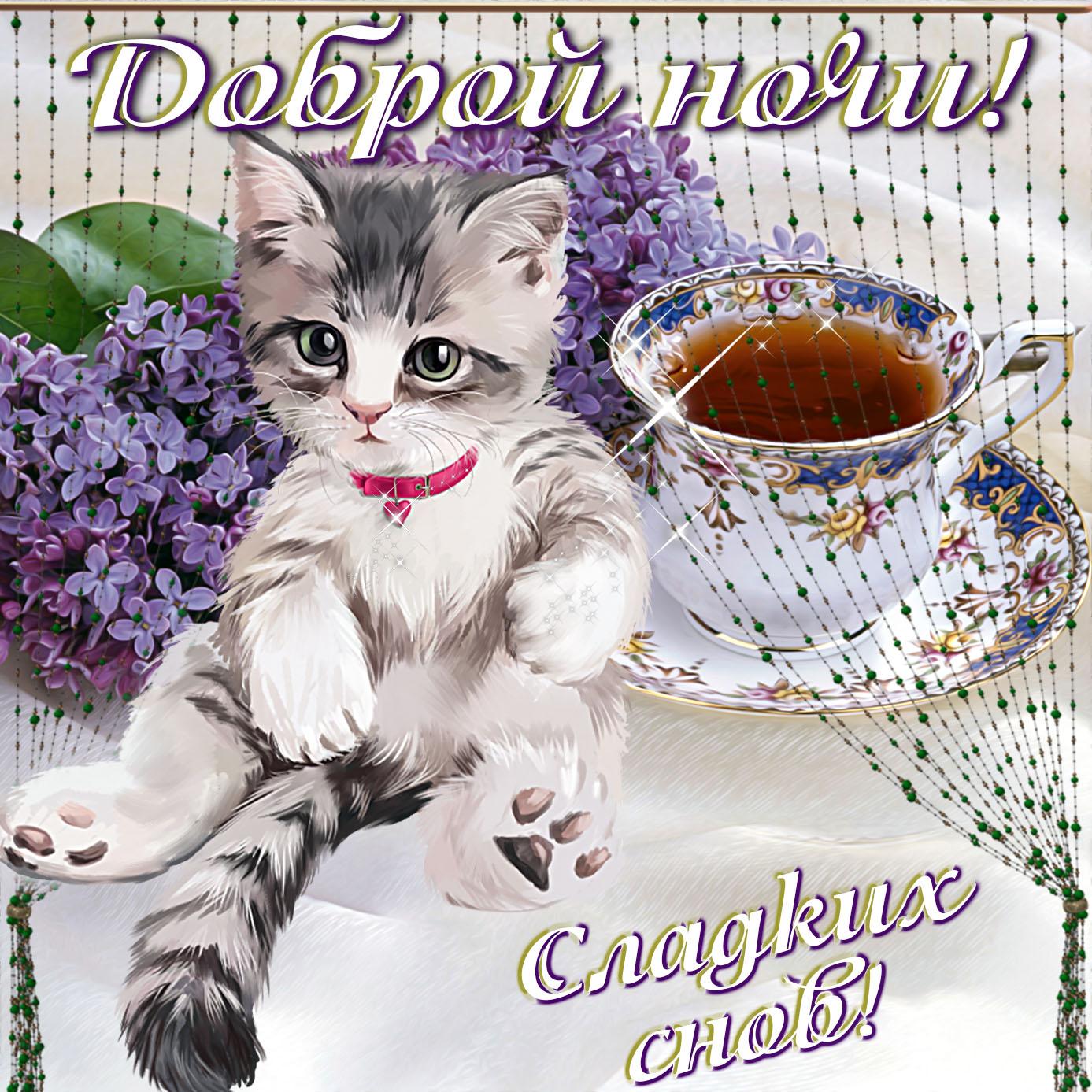 Открытка с котёнком желающим доброй ночи