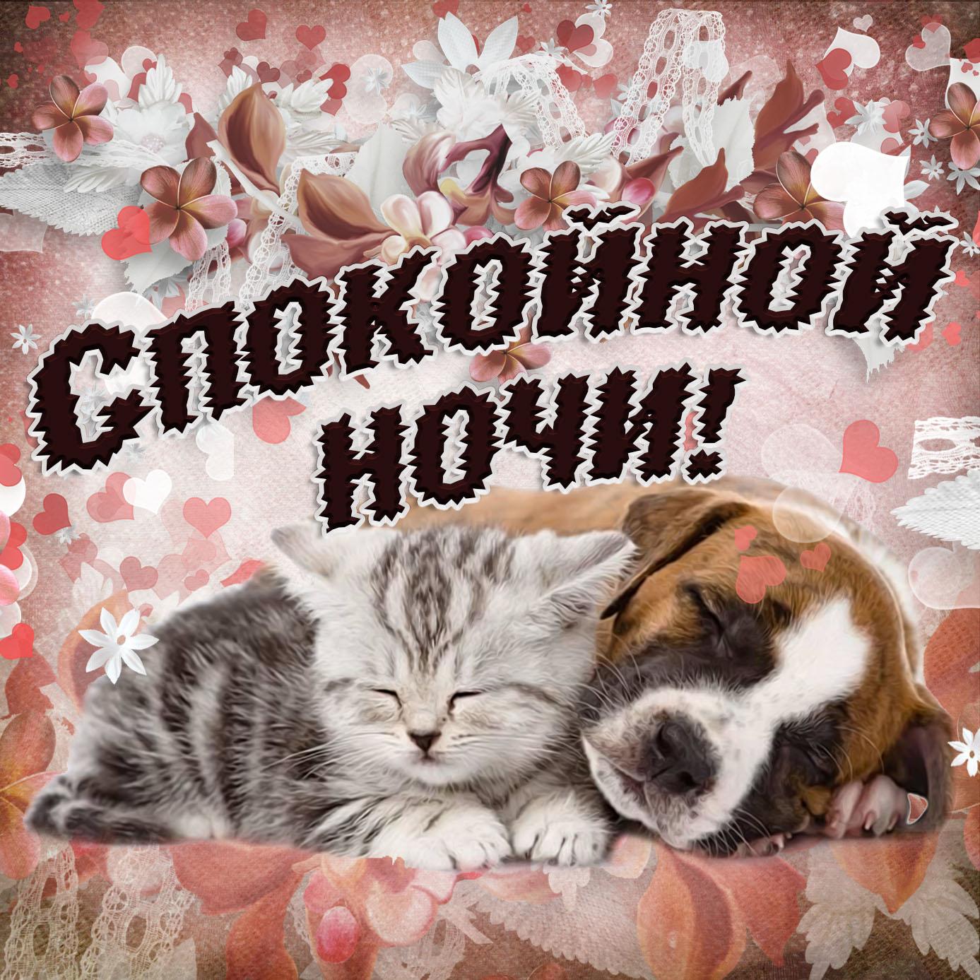 Собачка желает спокойной ночи на милой открытке