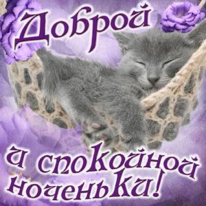 Открытка доброй ноченьки с милым котиком