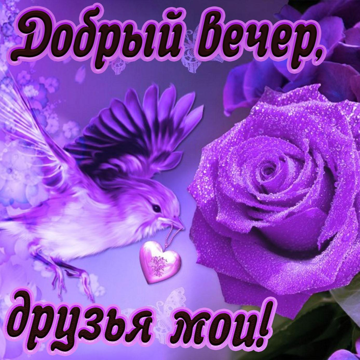 Открытка добрый вечер друзья мои с розой