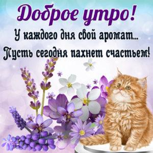 Яркая открытка с котиком желающим доброго утра