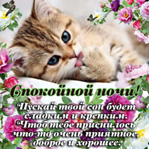 Открытка с пожеланием спокойной ночи от котика