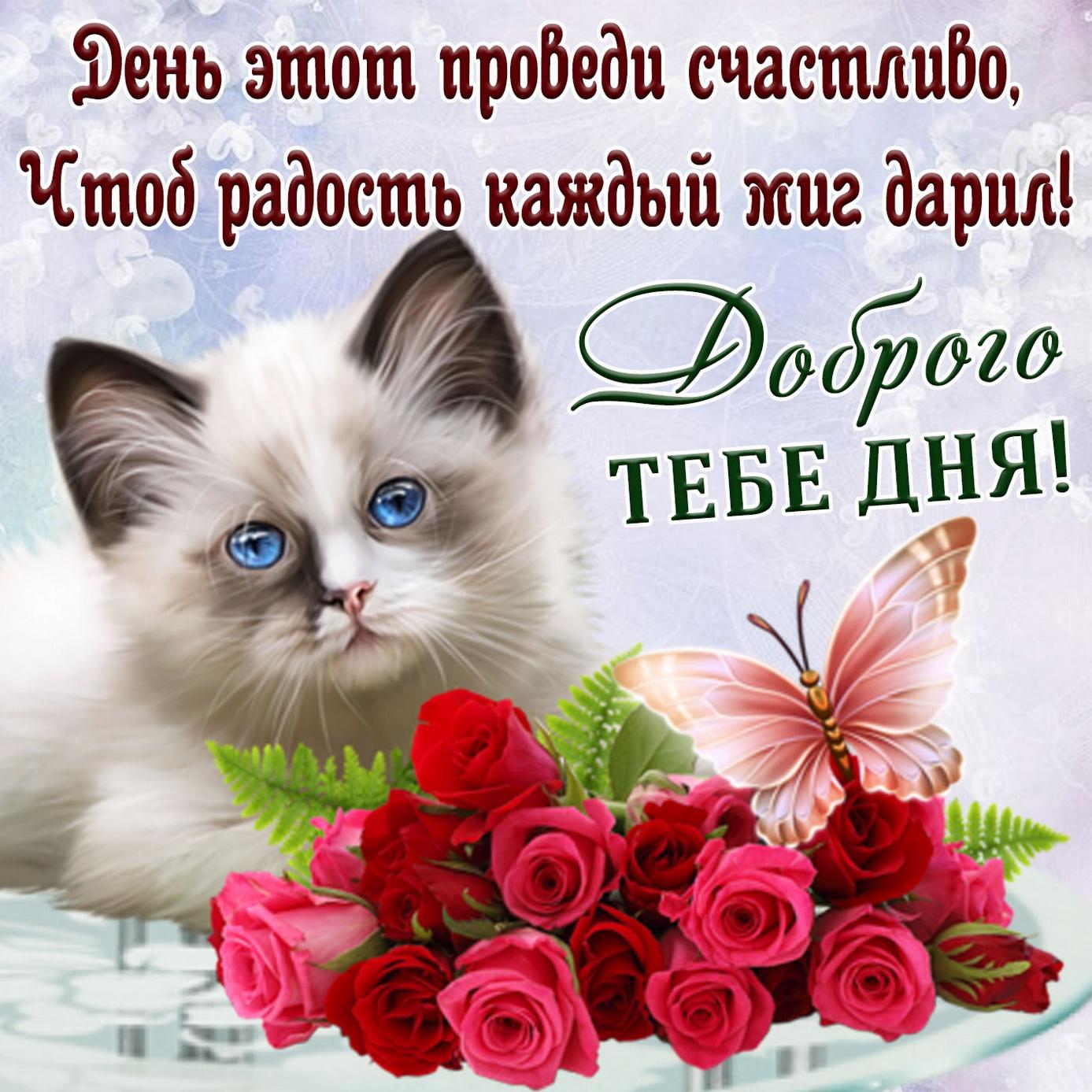 Картинка с котёнком желающим тебе доброго дня