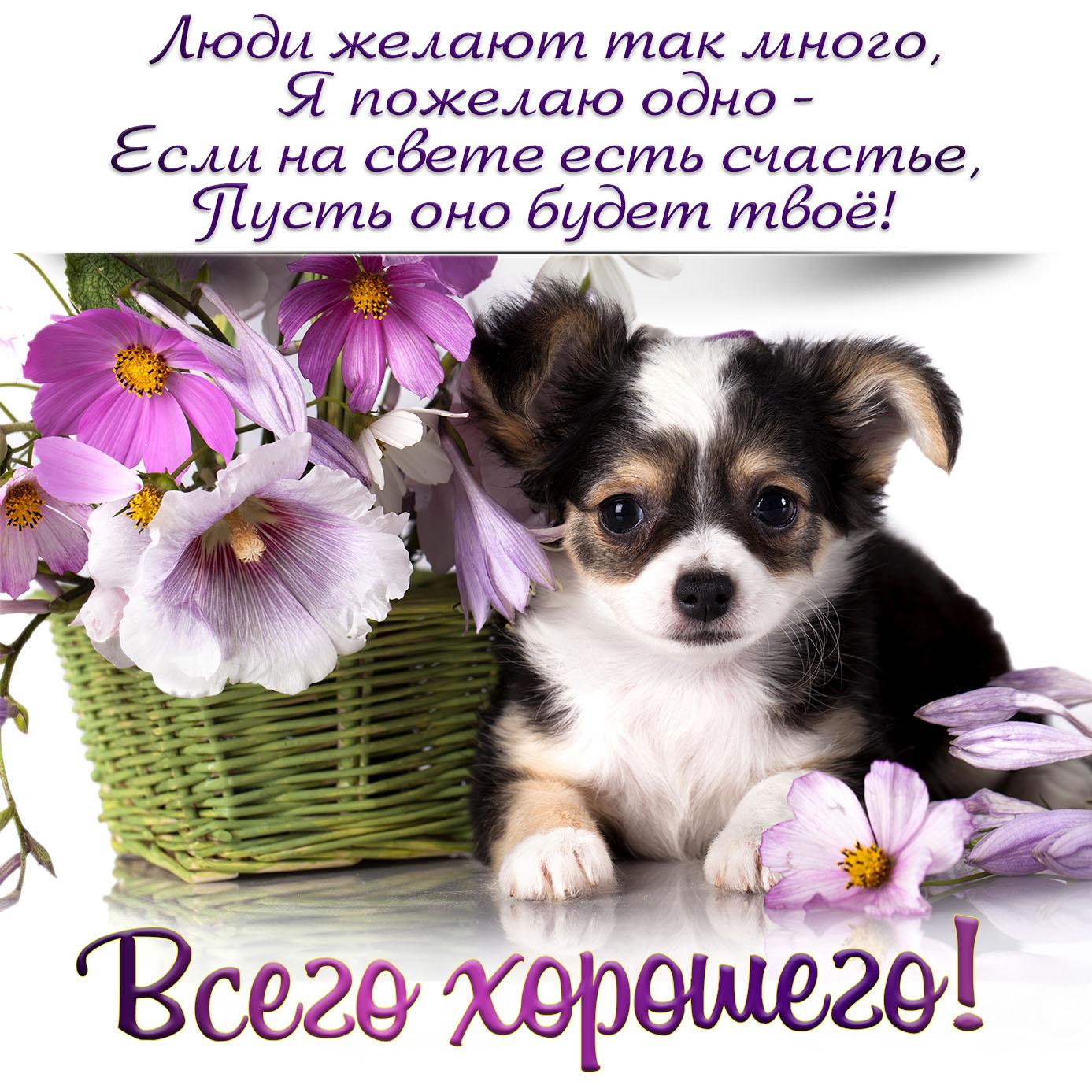 Открытка с милой собачкой и пожеланием всего хорошего