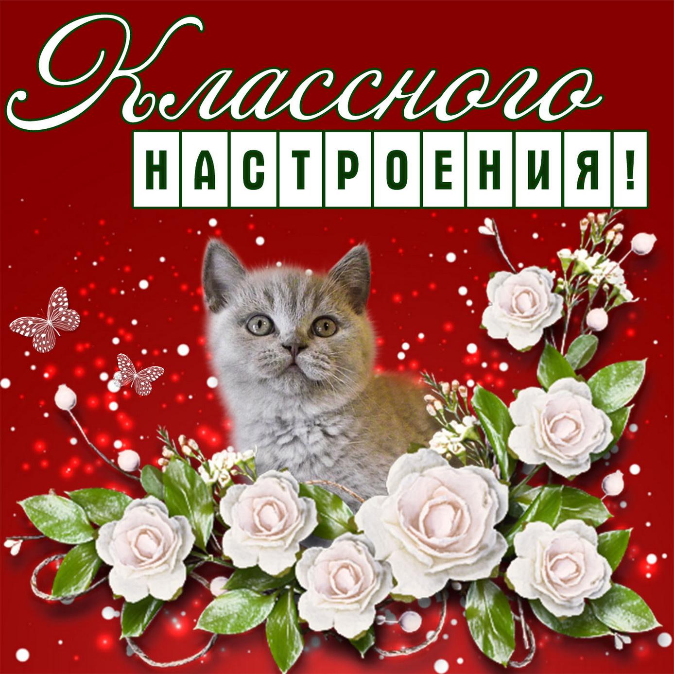 Котёнок на картинке желает классного настроения