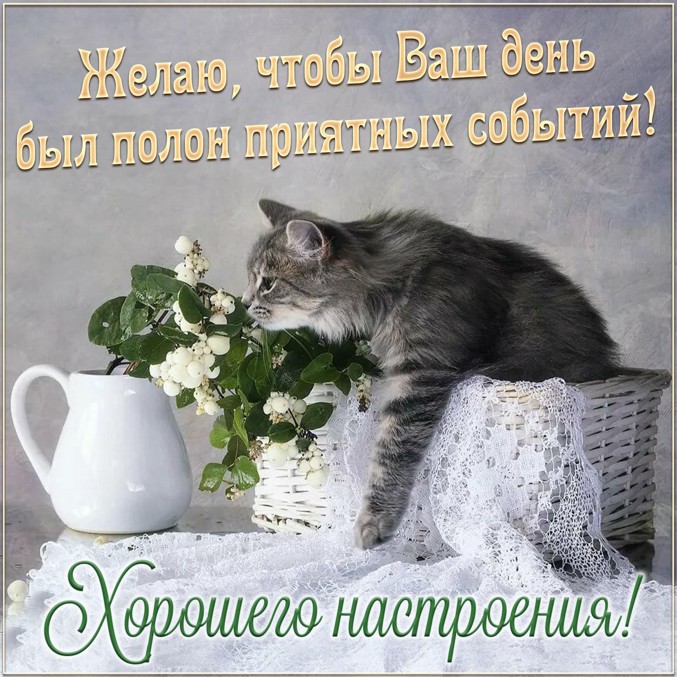 Котик на открытке желает хорошего настроения