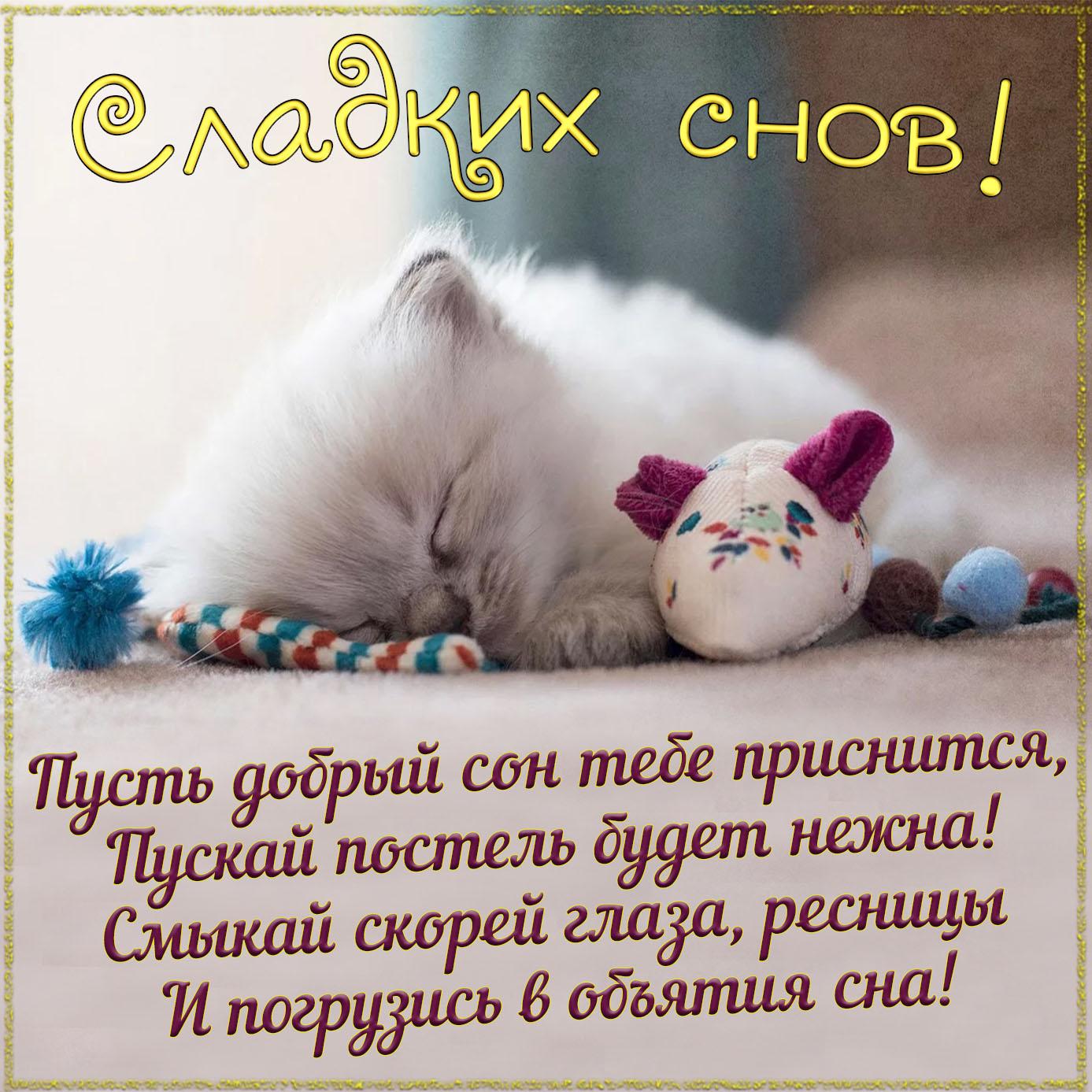 Открытка с котёнком и пожеланием сладких снов