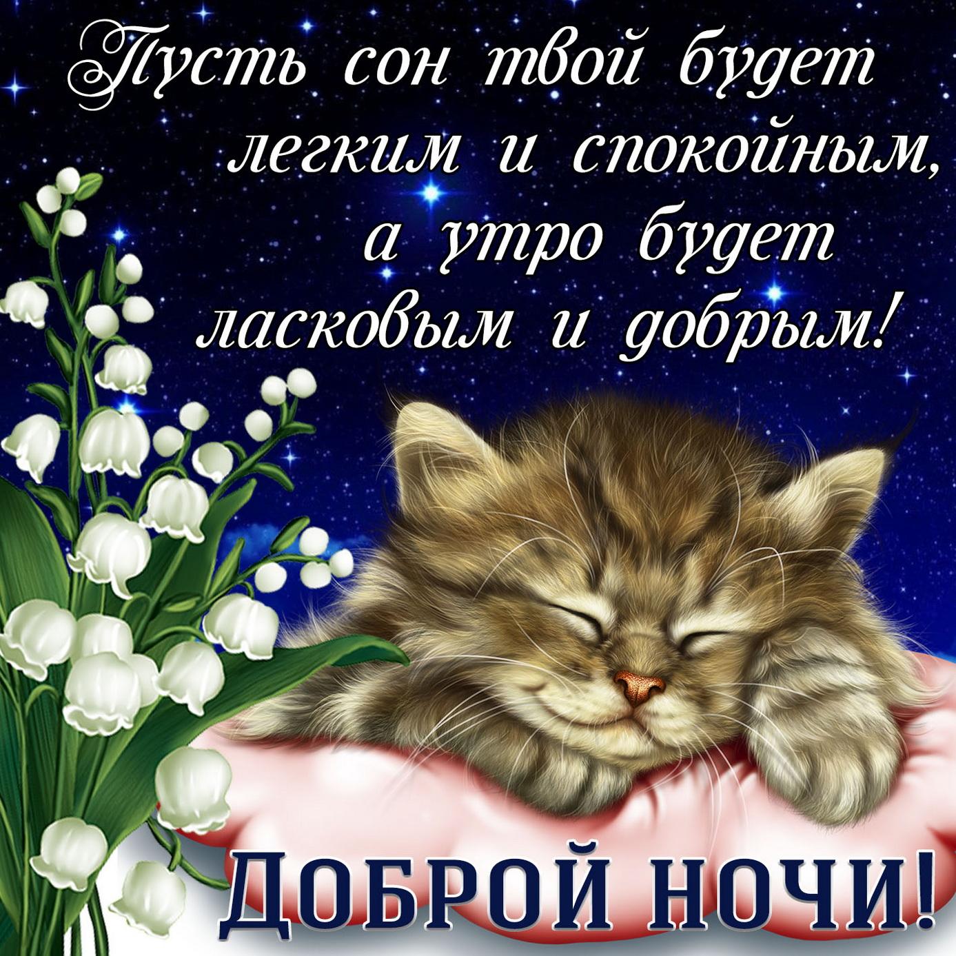 Картинка со спящим котиком и пожеланием доброй ночи