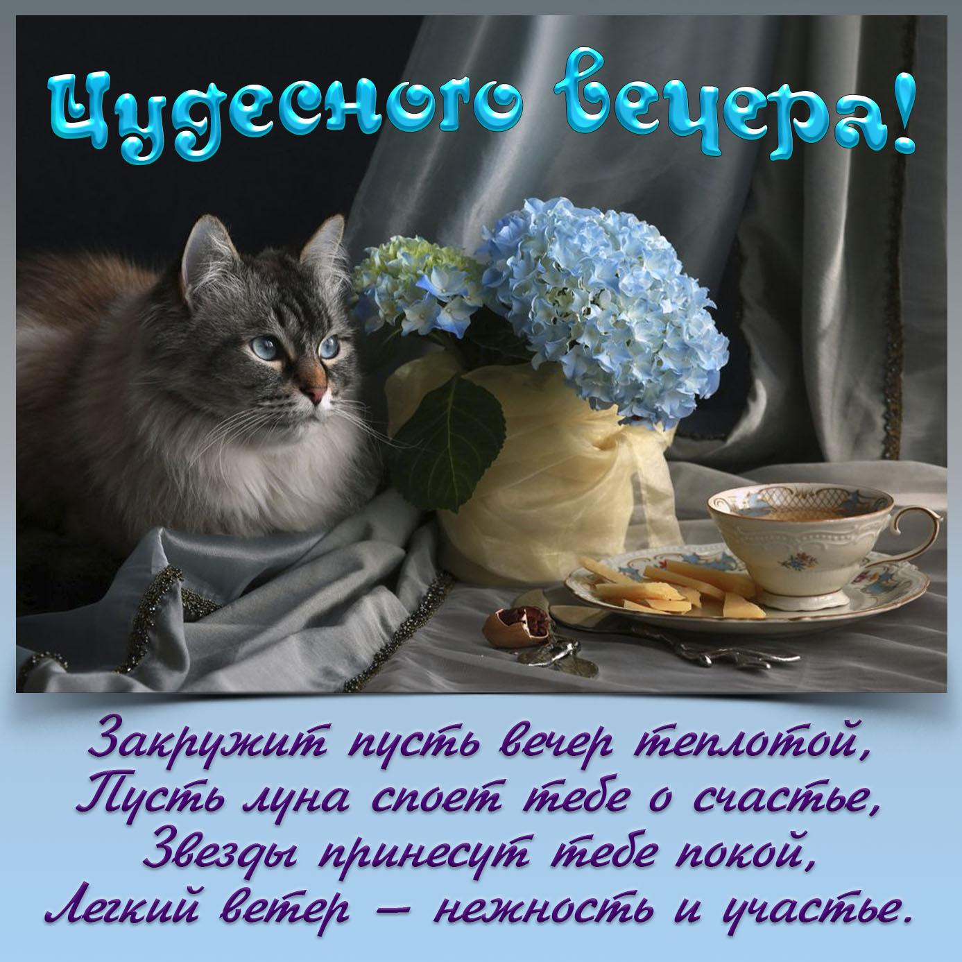 Картинка с котом желающим тебе чудесного вечера