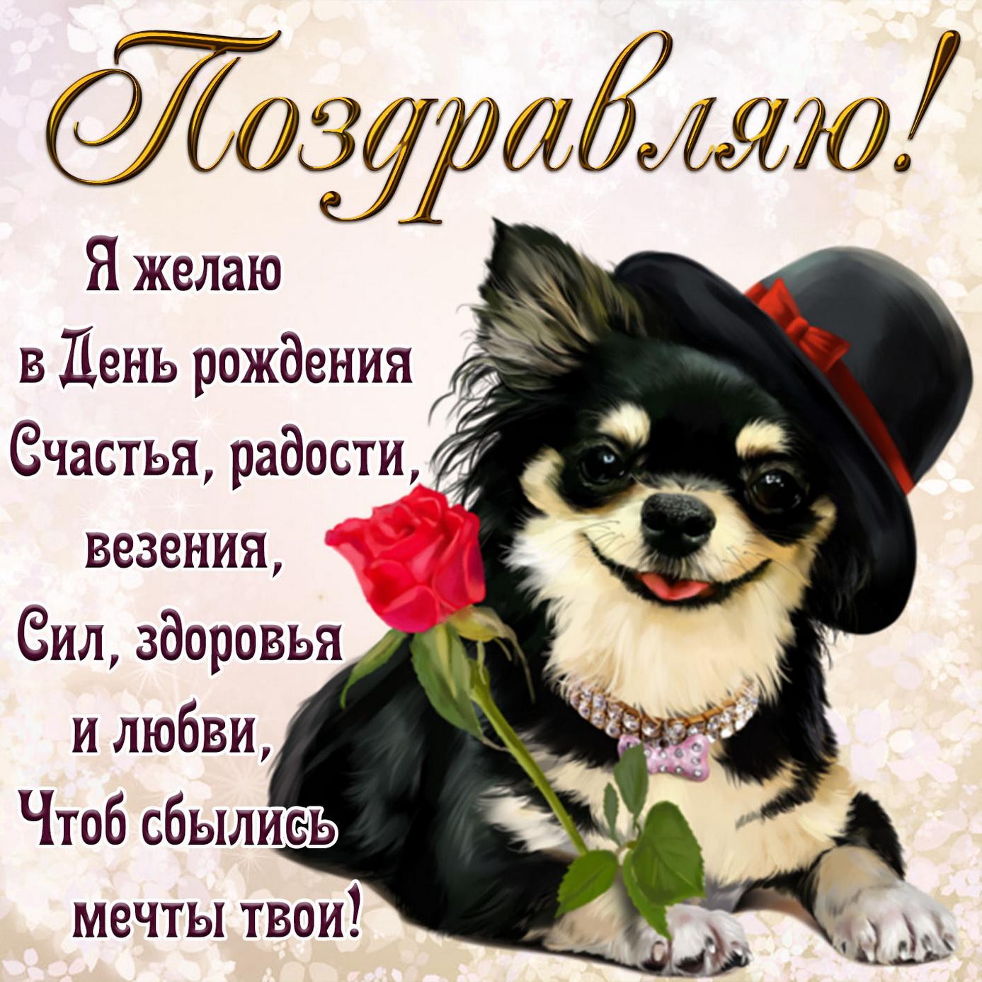 Картинка на День рождения с собачкой в шляпке