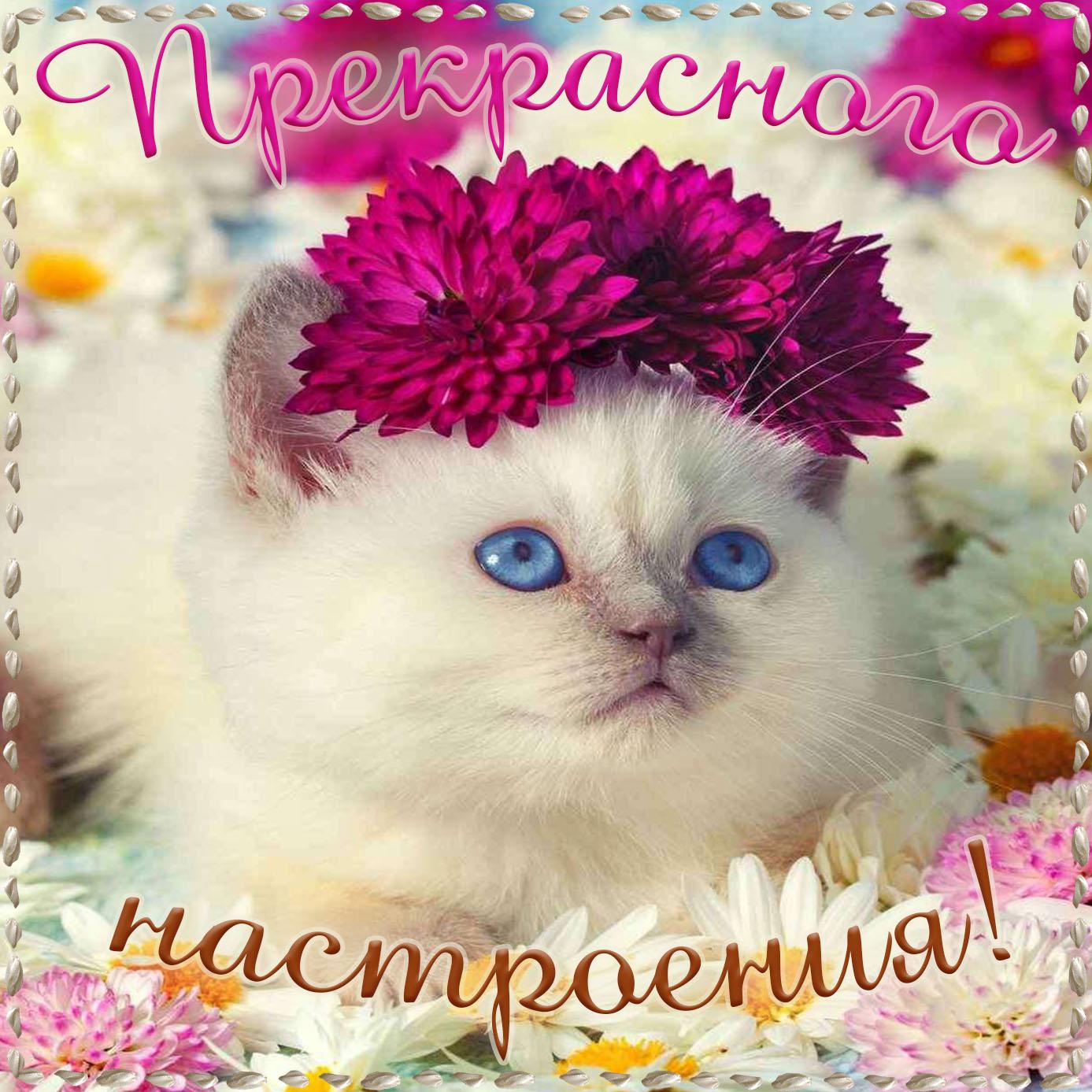 Милый котик желает всем прекрасного настроения