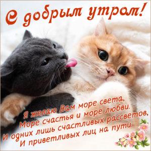 Открытка с котиками и пожеланием доброго утра