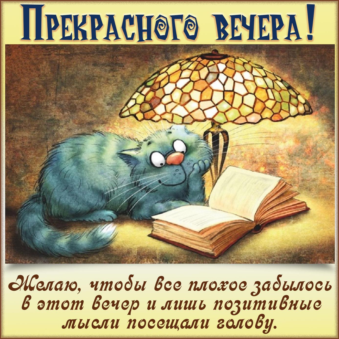 Котик с книжкой желает прекрасного вечера