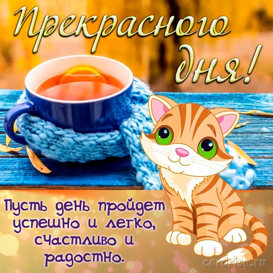 Пожелание прекрасного дня от милого котёнка