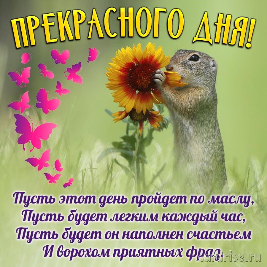 Милый зверёк и пожелание прекрасного дня