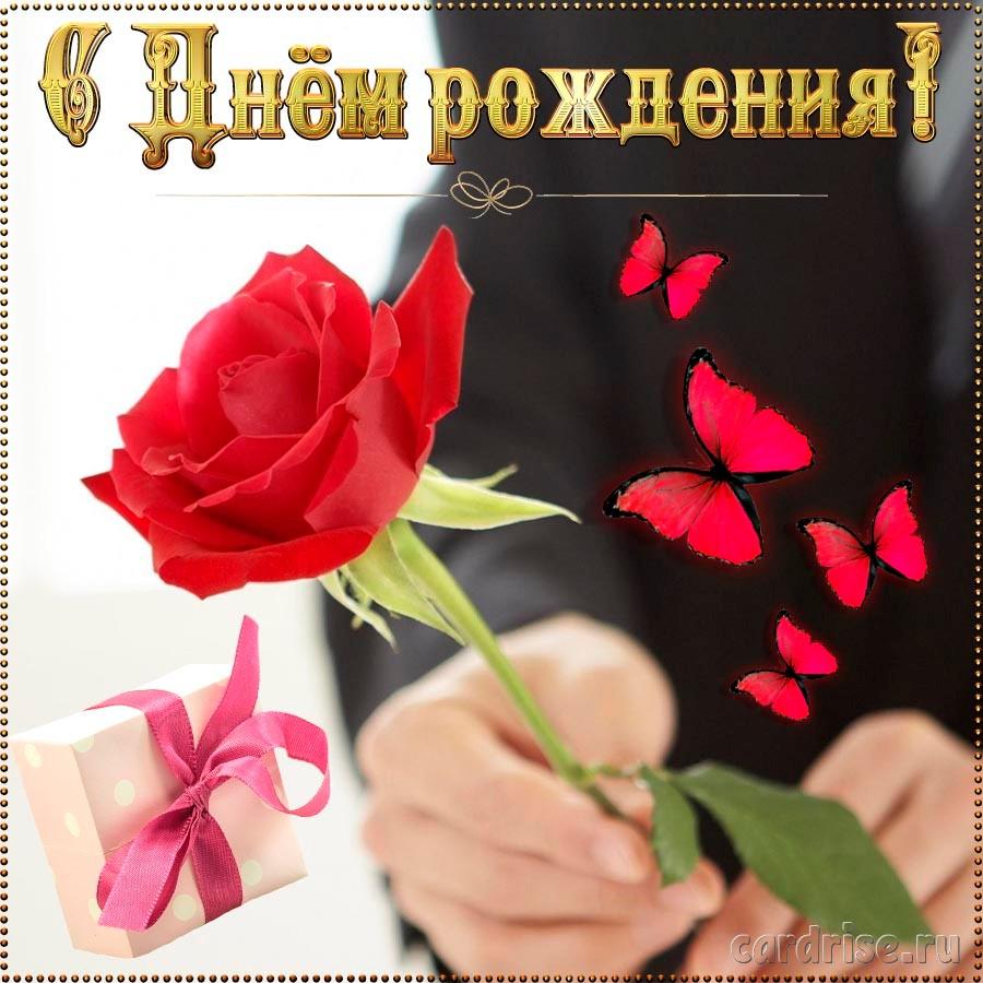Красивая роза на картинке женщине на День рождения