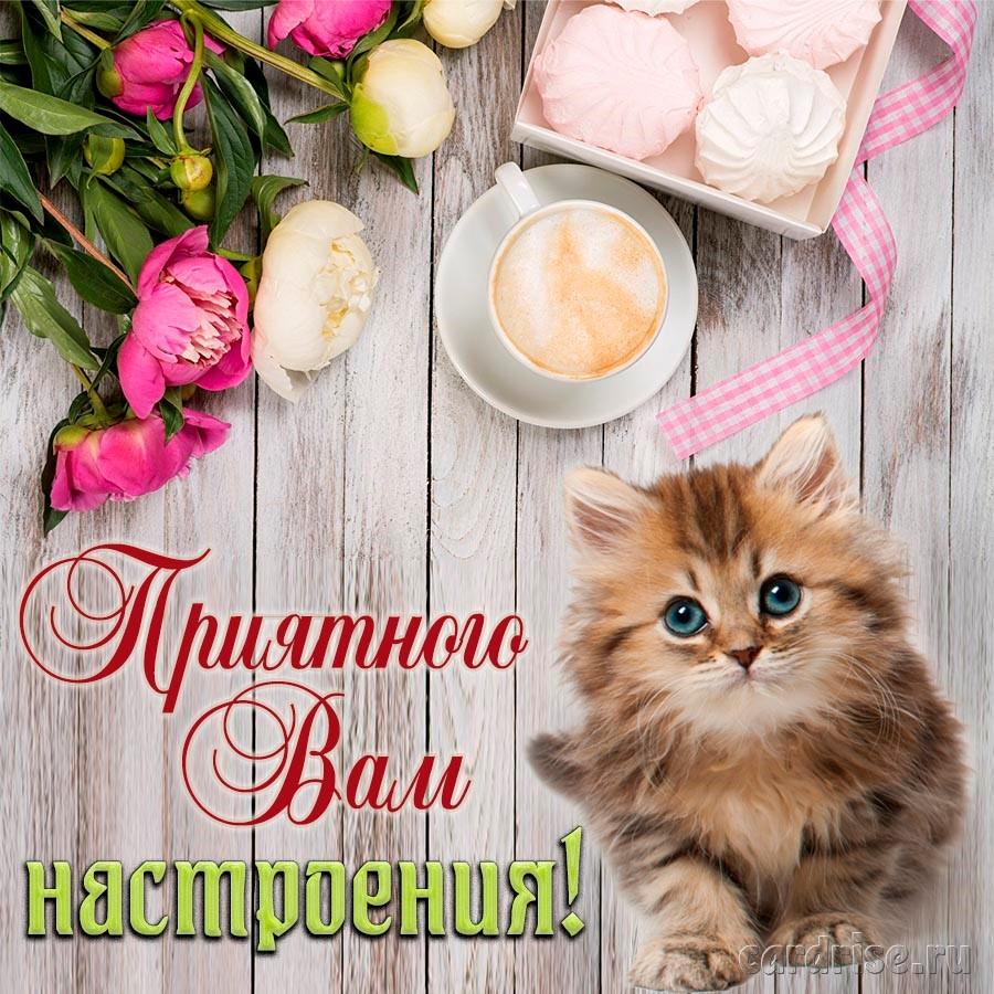 Котёнок желает Вам приятного настроения