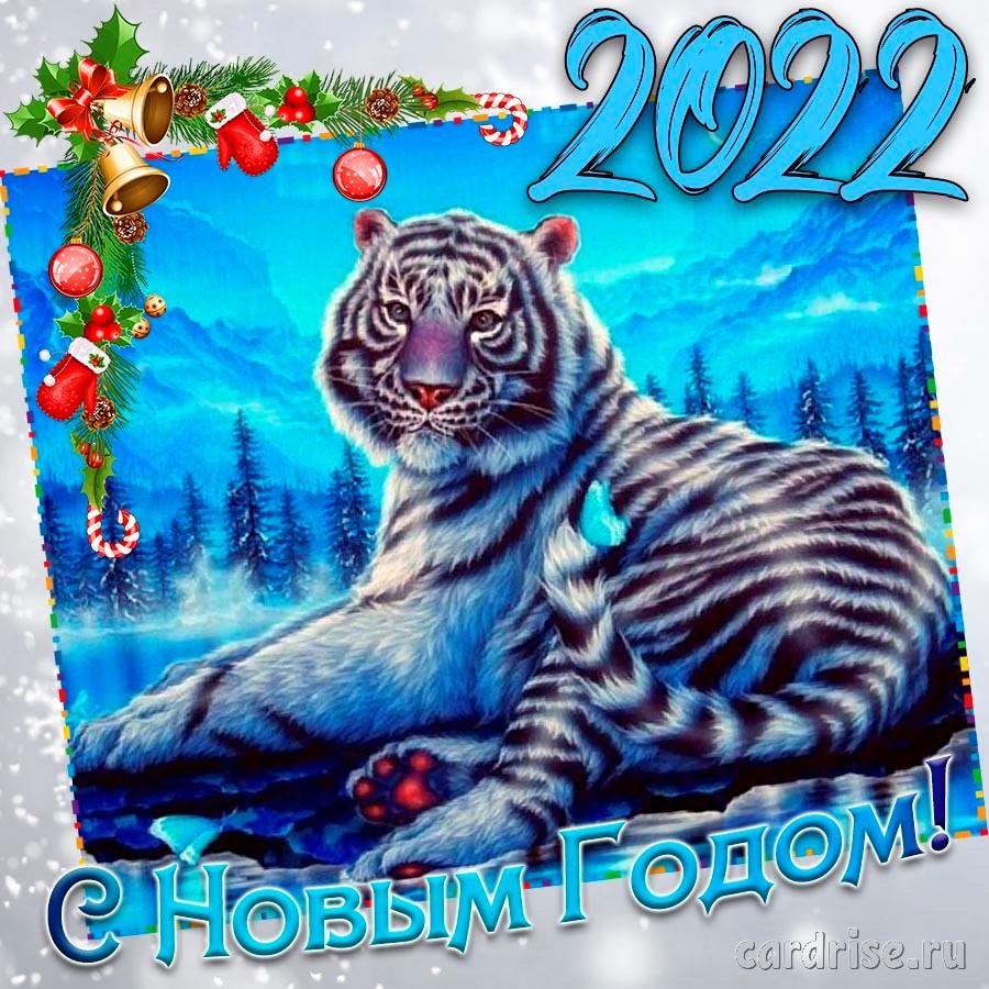 Яркая картинка на Новый 2022 год с тигром