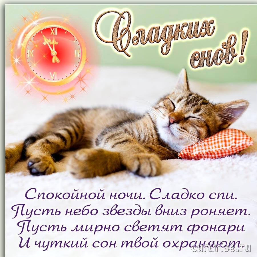Открытка с пожеланием сладких снов и котиком