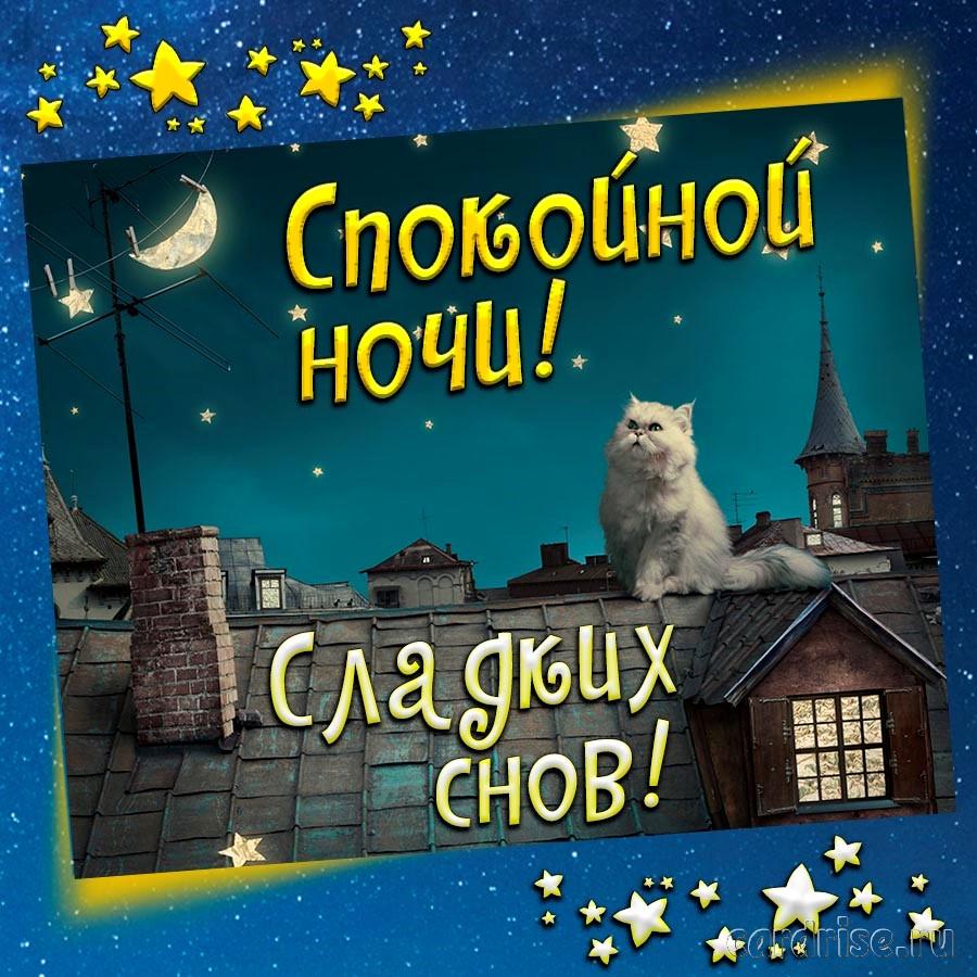 Открытка с котиком желающим спокойной ночи