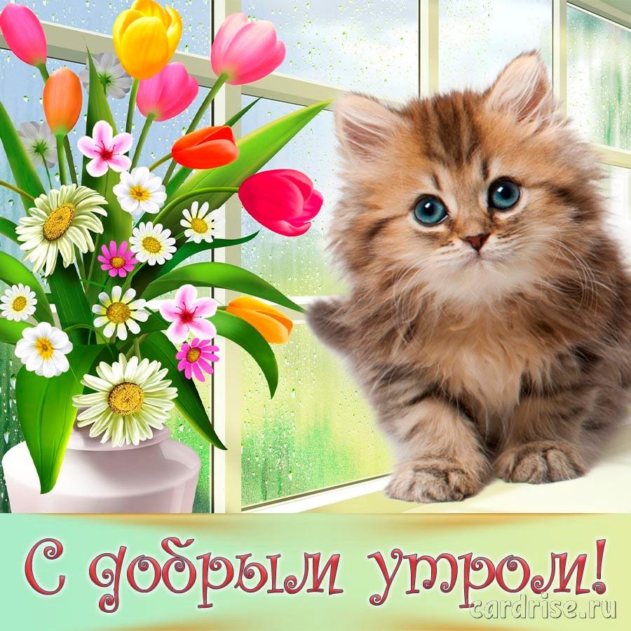 Букет цветов и котик на приятной открытке